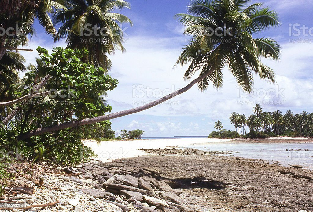 Coral reef exposed Coconut Tree  Atoll beach Marshall Islands stock photo