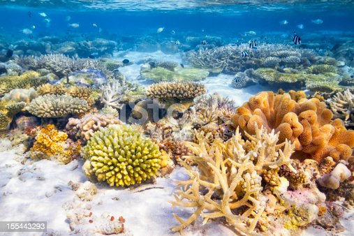 colorful coral reef on maldives