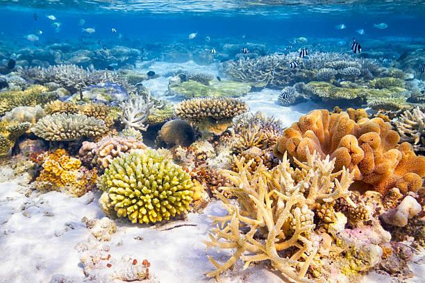 Coral Reef Garden stock photo