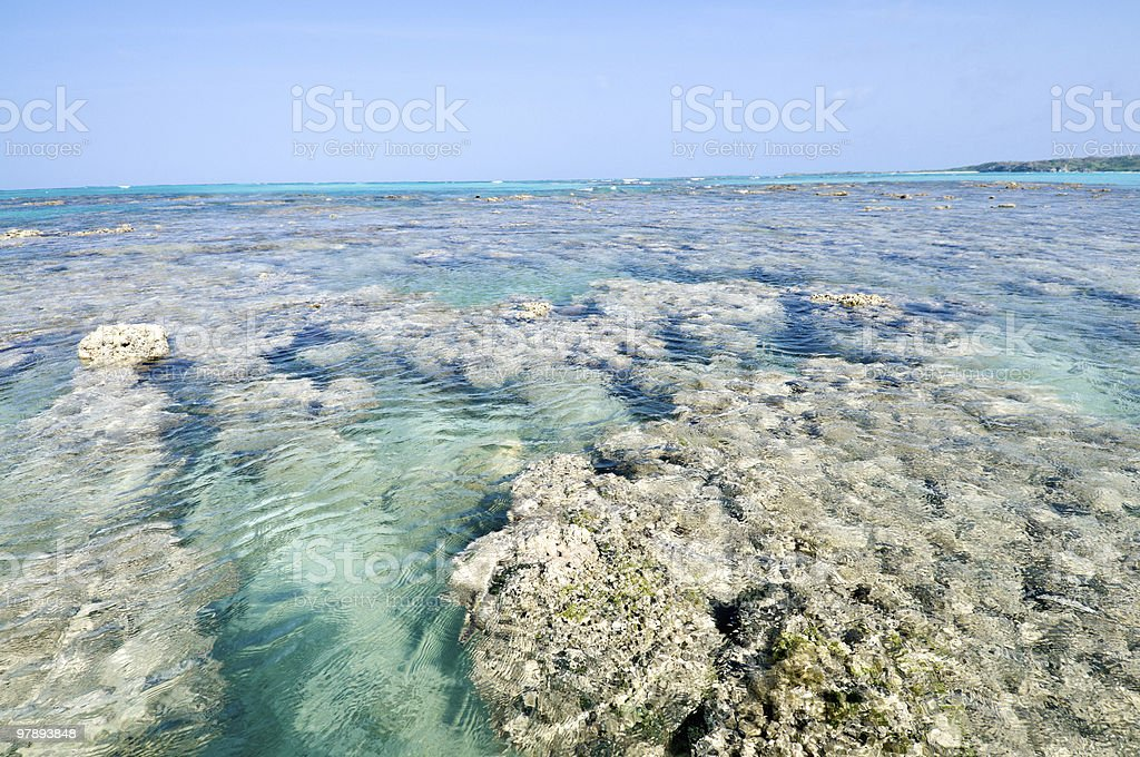 Coral reef in a Tropical island royalty-free stock photo