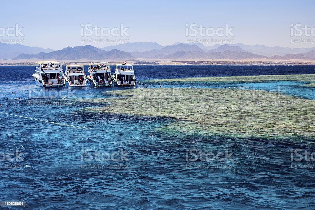 Coral reef in Egypt royalty-free stock photo