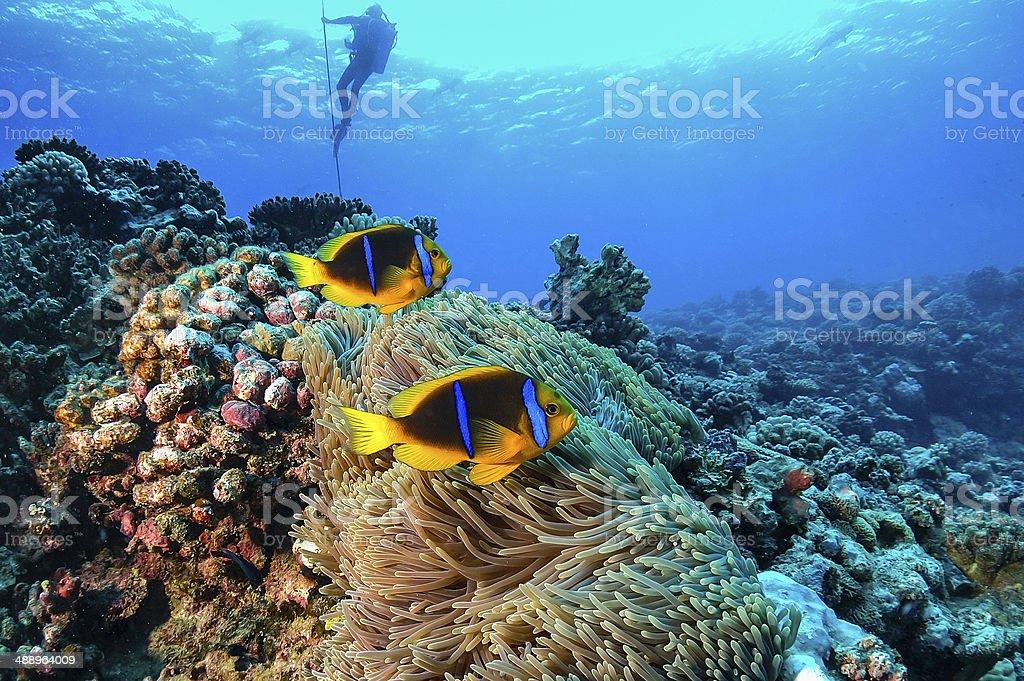 Fotografía de Arrecife De Coral En La Polinesia Francesa y más banco ...