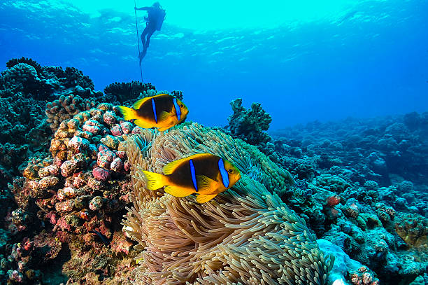 Coral Reef in French Polynesia stock photo