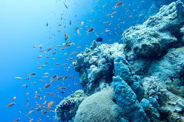 barriera corallina nel mare tropicale al grande profondità, subacqueo - fondale marino foto e immagini stock