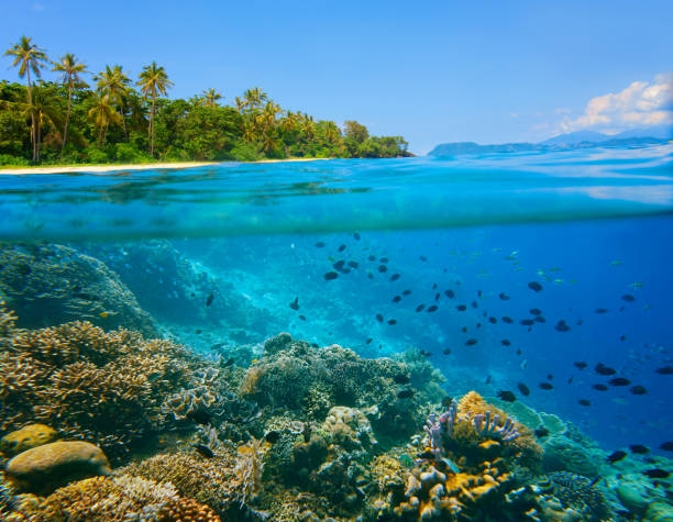 Coral reef in tropical sea on a background of green island stock photo