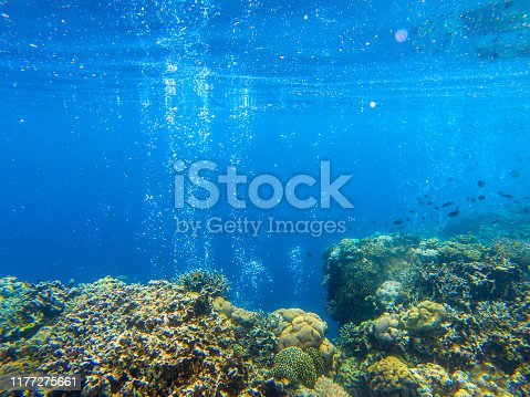 Coral reef landscape with tropical fish and air bubbles. Oxygen bubbles in blue seawater. Marine animals in wild nature. Coral reef view. Tropical seashore environment. Exotic island vacation activity