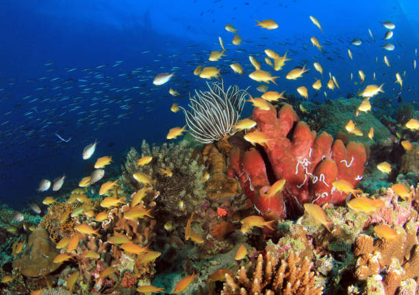 Coral Reef Moalboal stock photo