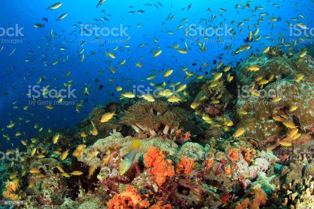 Coral Reef Moalboal bildbanksfoto