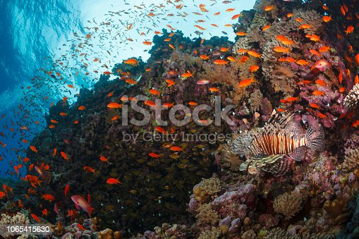 Coral reef  Nature & Wildlife Underwater Sea life Scuba Diver Point of View  Underwater photo