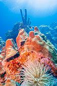 Underwater off the coast of the Dutch island of Bonaire