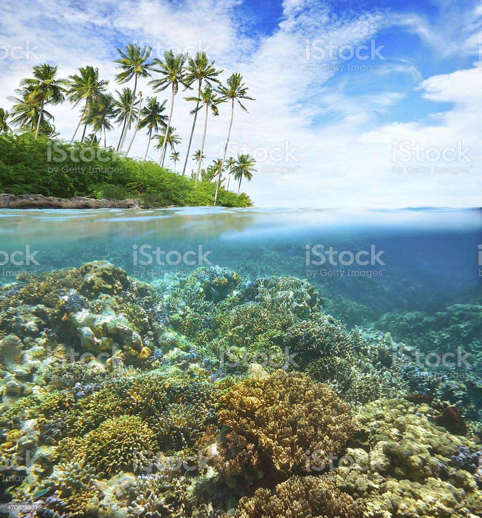 Coral reef on background of cloudy sky and island stock photo