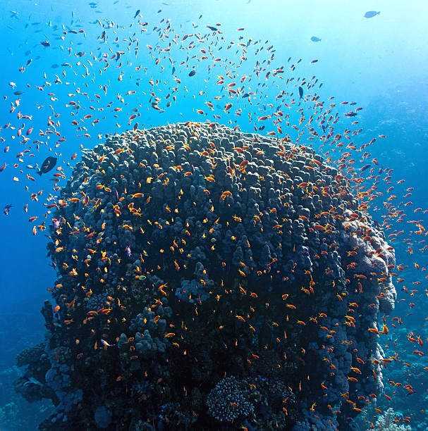 Coral reef - panorama stock photo