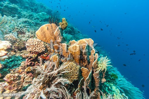 istock Coral reef 1087117112