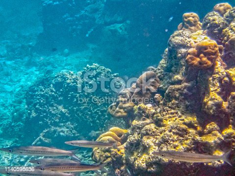 Coral reef in the Surin islands National Park in the Andaman Sea, Thailand. long thin grey fish schooling in the Andaman sea.