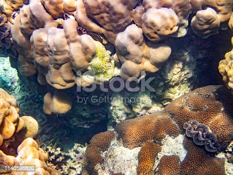 Coral reef in the Surin islands National Park in the Andaman Sea, Thailand.