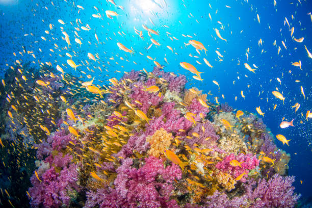 coral reef - great barrier reef stock pictures, royalty-free photos & images