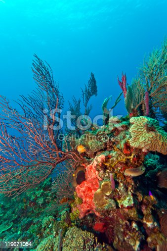 istock Coral reef 119671054