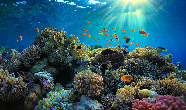 coral reef beautiful coral reef and mach fish undersea stock pictures, royalty-free photos & images