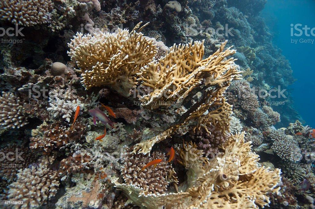 Coral reef - Royalty-free Animal Stock Photo