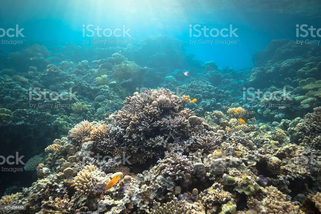 Coral reef Coral reef in Egypt Animal Stock Photo