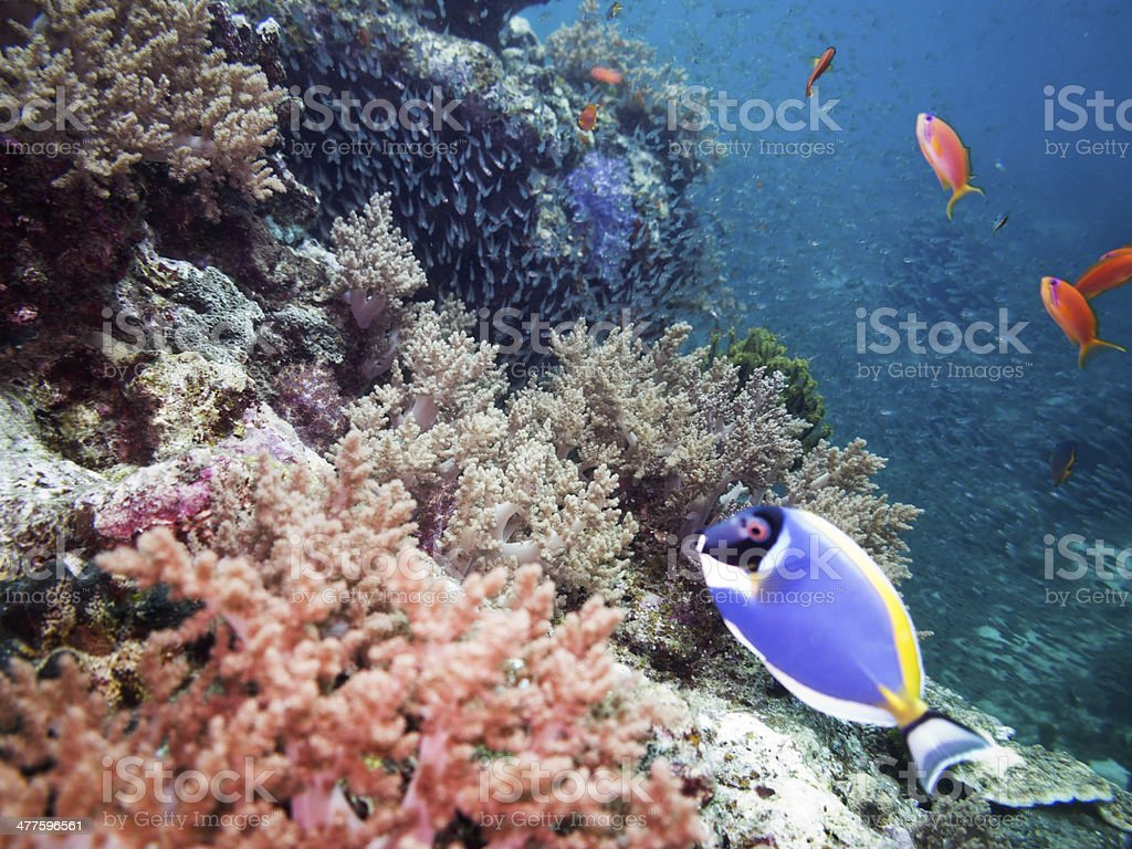 Coral Reef royalty-free stock photo