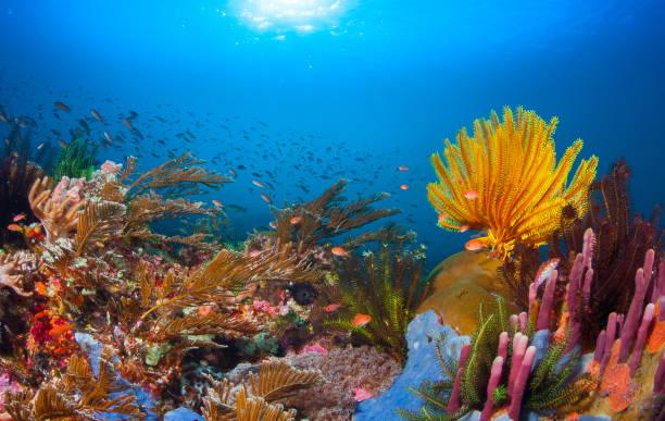 coral reef - barriera corallina foto e immagini stock