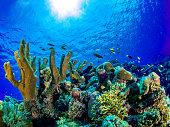 Tubbataha Reef Philippinen