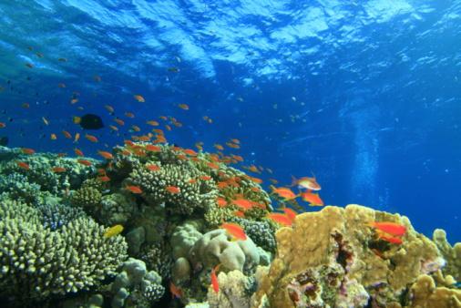 산호색 산호초 0명에 대한 스톡 사진 및 기타 이미지