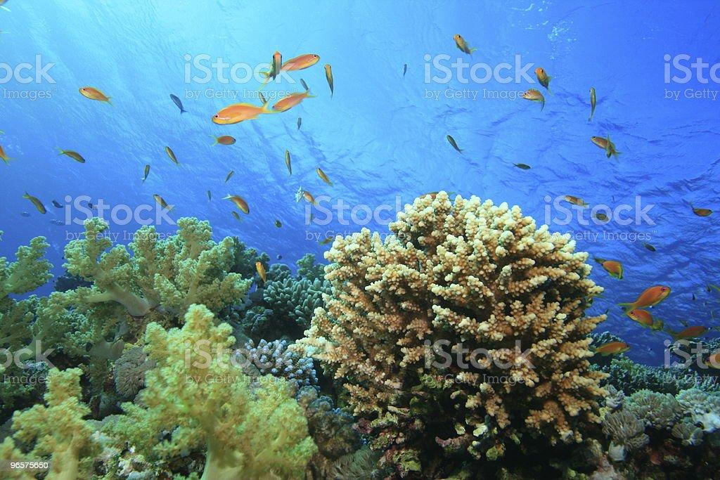 Recife de Coral - Royalty-free Coral - Cnidário Foto de stock