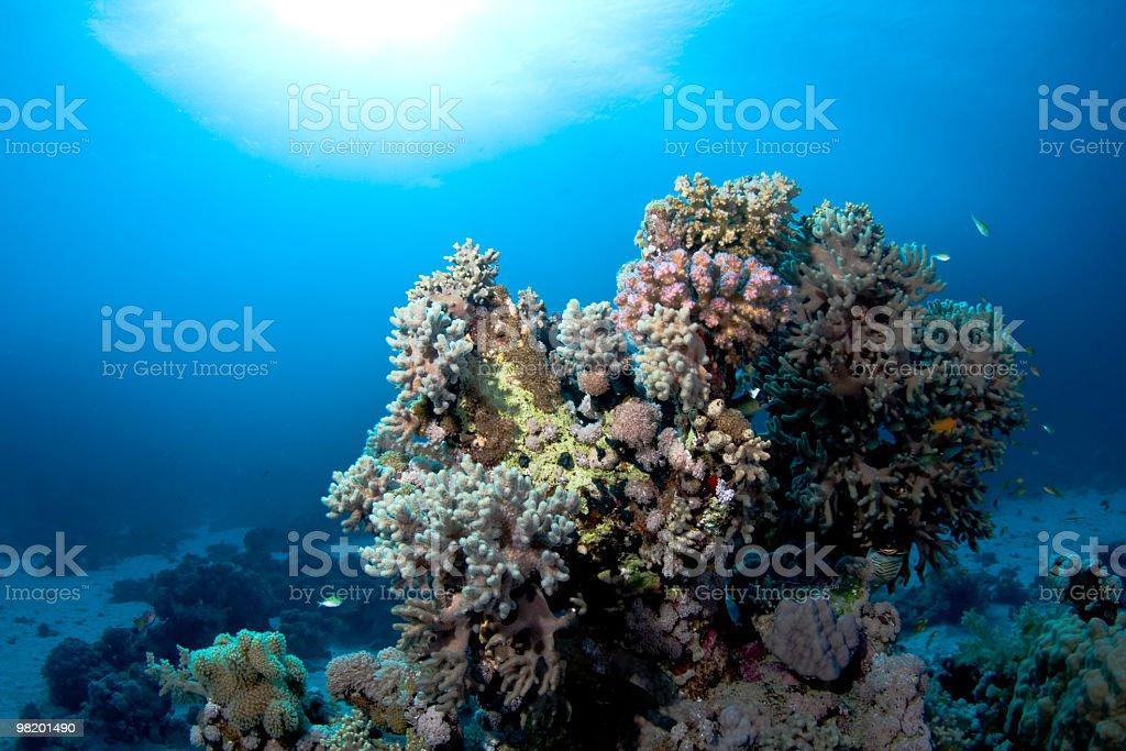 Corallina reef foto stock royalty-free