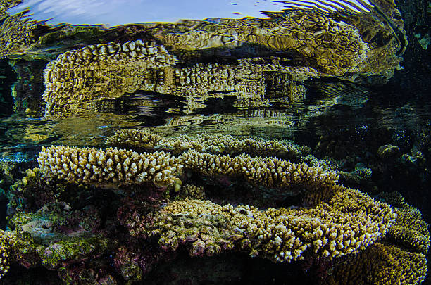 Coral Reef Red Sea Reflection stock photo