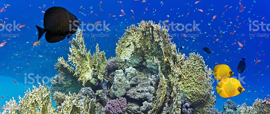 Coral reef scene - panorama stock photo