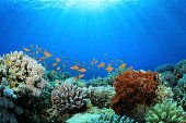 Corals and Sponge with Tropical Fish and Sunbeams