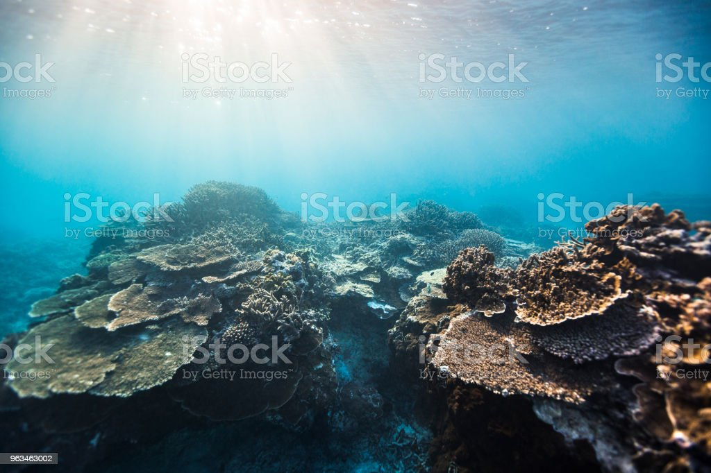 Coral reef system stock photo