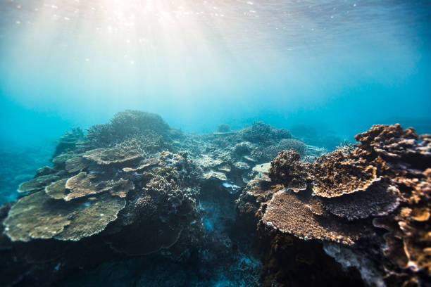 coral reef system - great barrier reef stock pictures, royalty-free photos & images