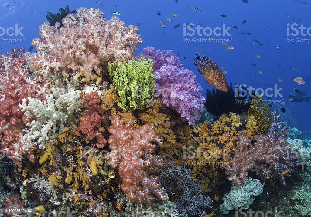 Coral reef, uderwater view photo libre de droits