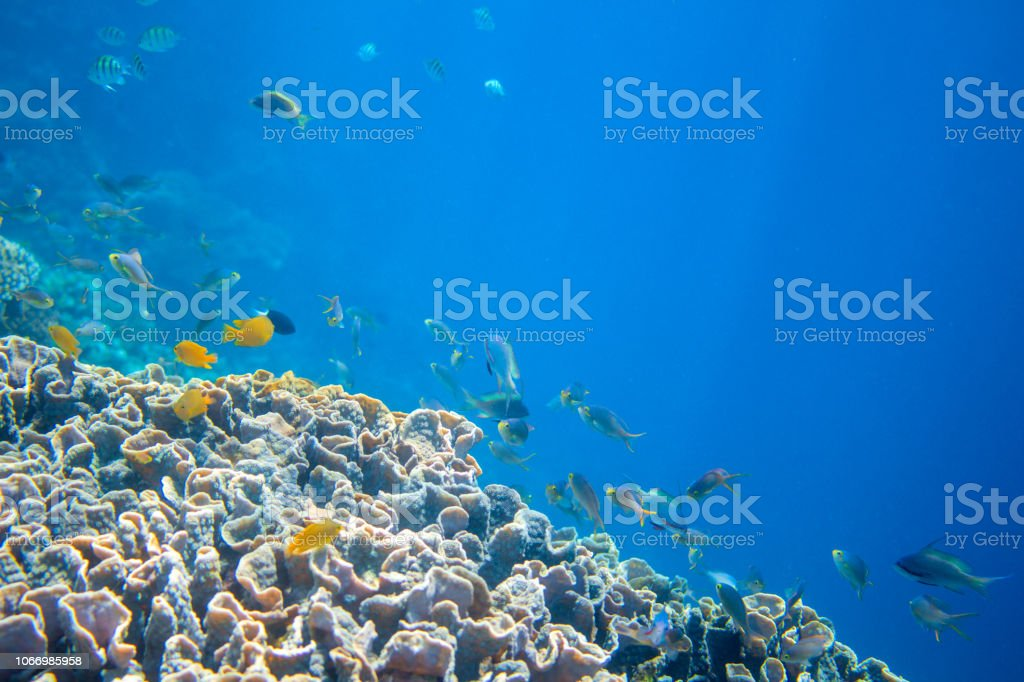 Coral reef wall with tropical fish. Warm blue sea view with clean...