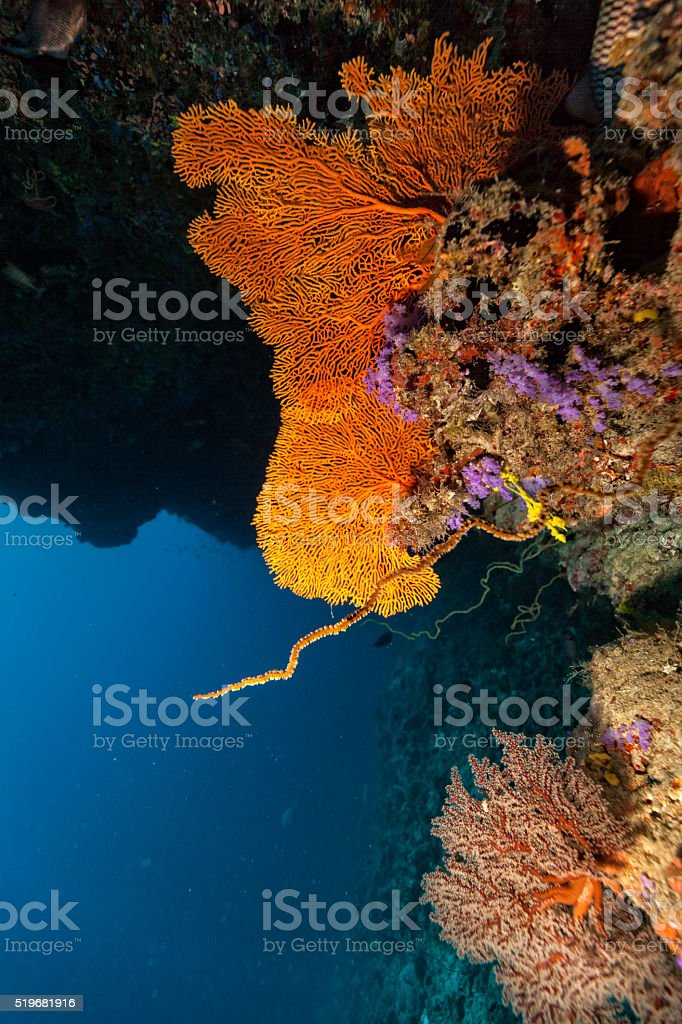 Coral reef with detail of soft corals stock photo