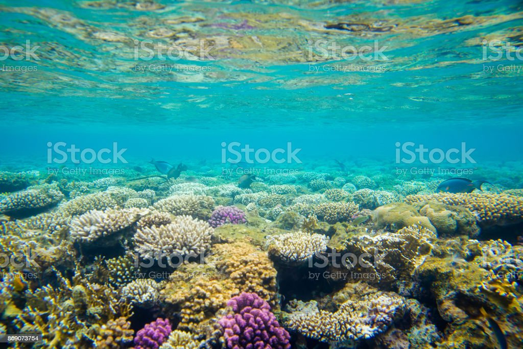 coral reef with fish of the red sea stock photo