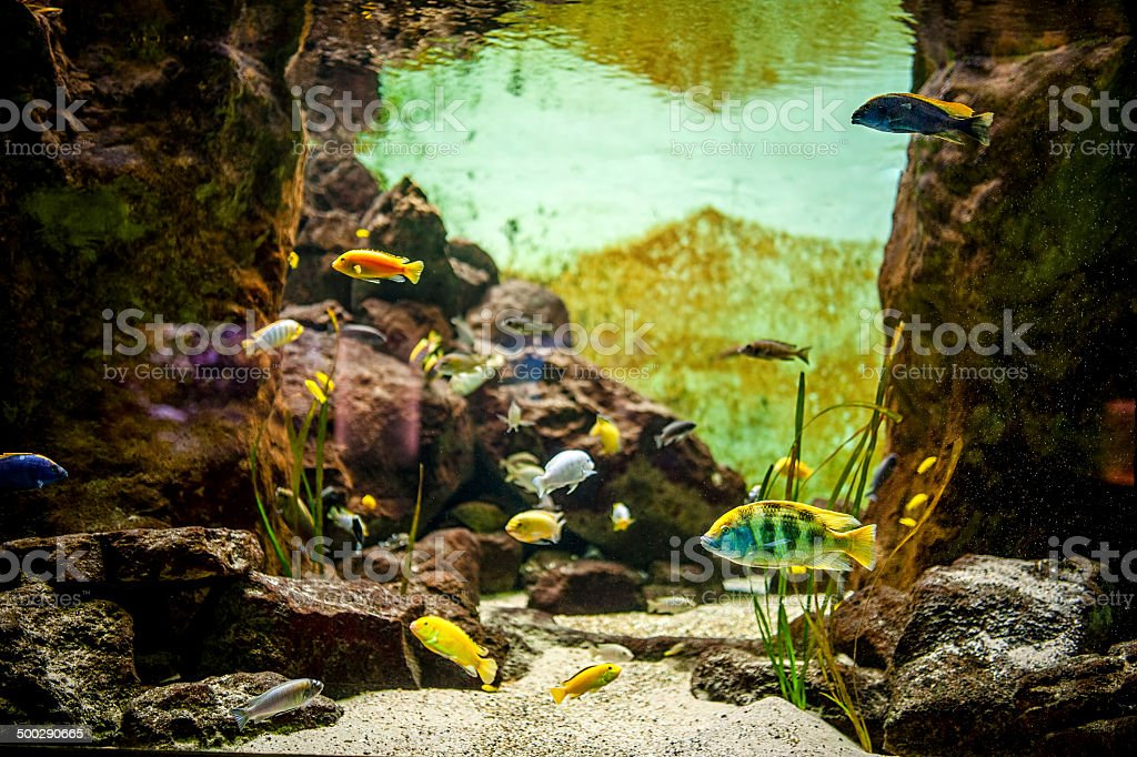 coral reef with fish on the bottom of sea royalty-free stock photo