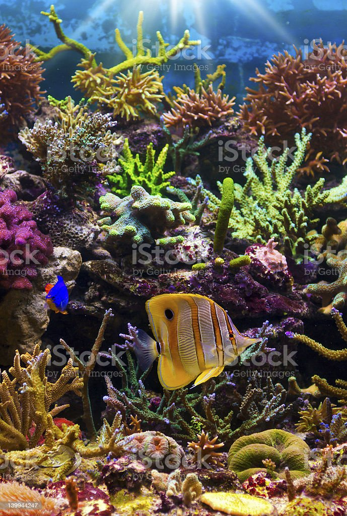 A coral reef with many bright colors stock photo