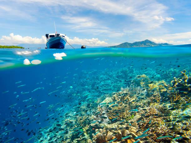 koraalrif met veel vis in de buurt van bunaken island, indonesië - rondvaartboot stockfoto's en -beelden