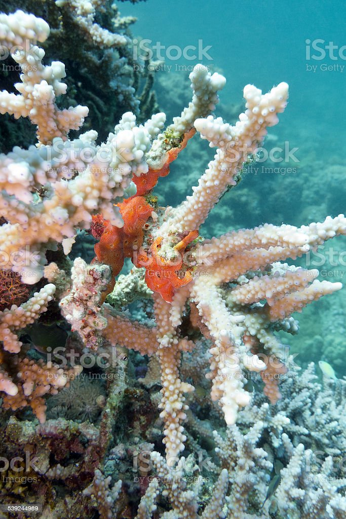 coral reef with sea sponge in tropical sea royalty-free stock photo