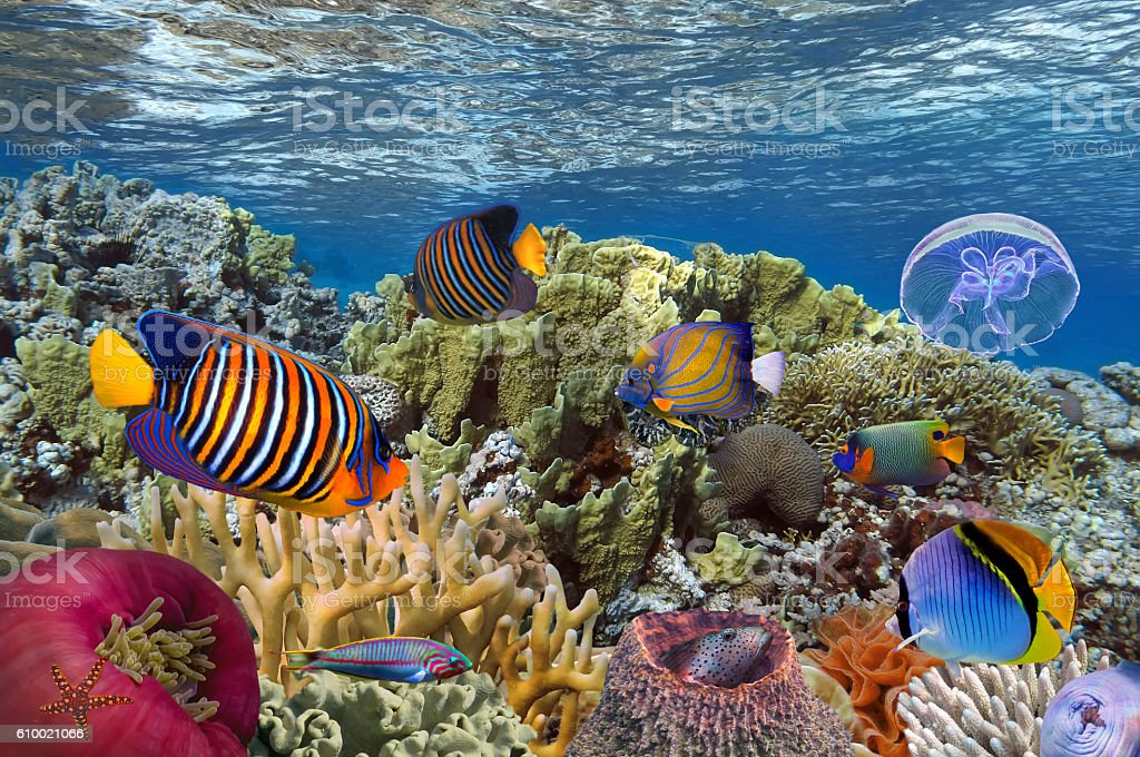 Coral reef with soft and hard corals stock photo