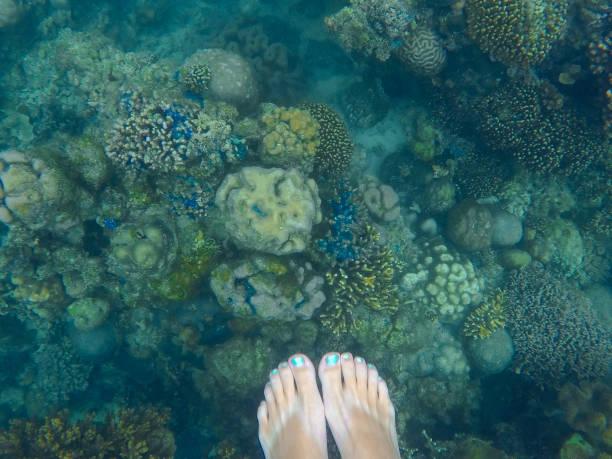 korallenriff mit frau die füße oben. unterwasser foto mit verschiedenen korallen. - meerjungfrau wellen stock-fotos und bilder