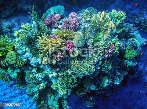 Very beautiful coral reef with hard corals.