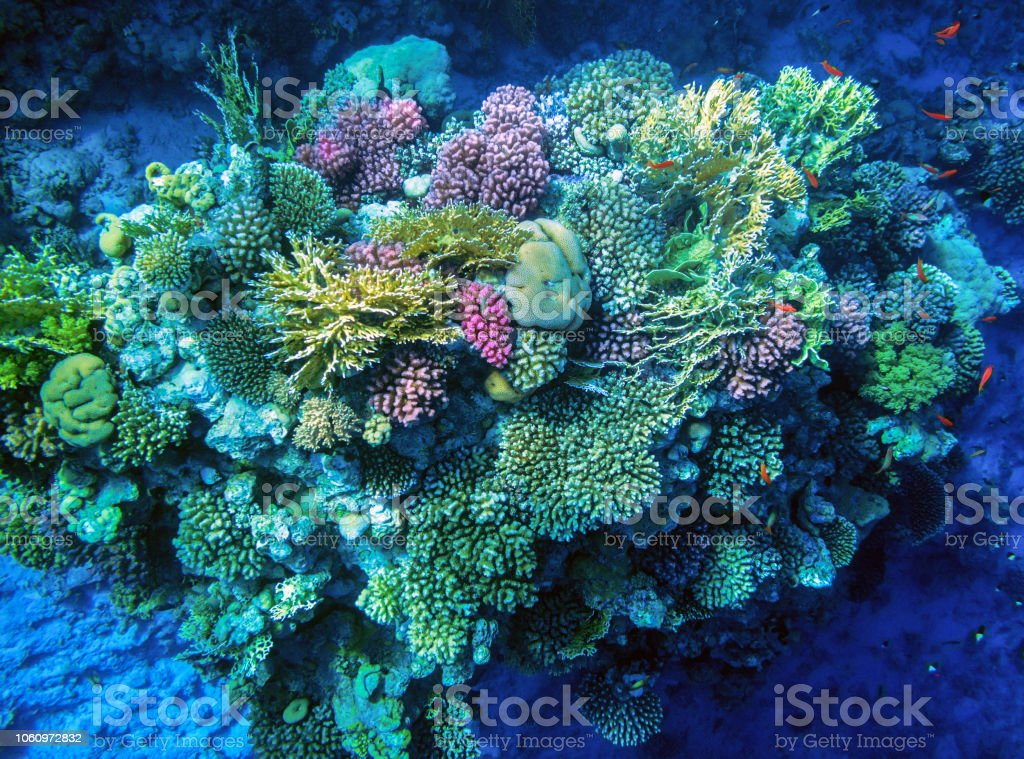 Coral reefs of the Red Sea. stock photo