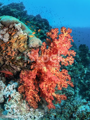 Underwater world. Beautiful coral reef Red sea.