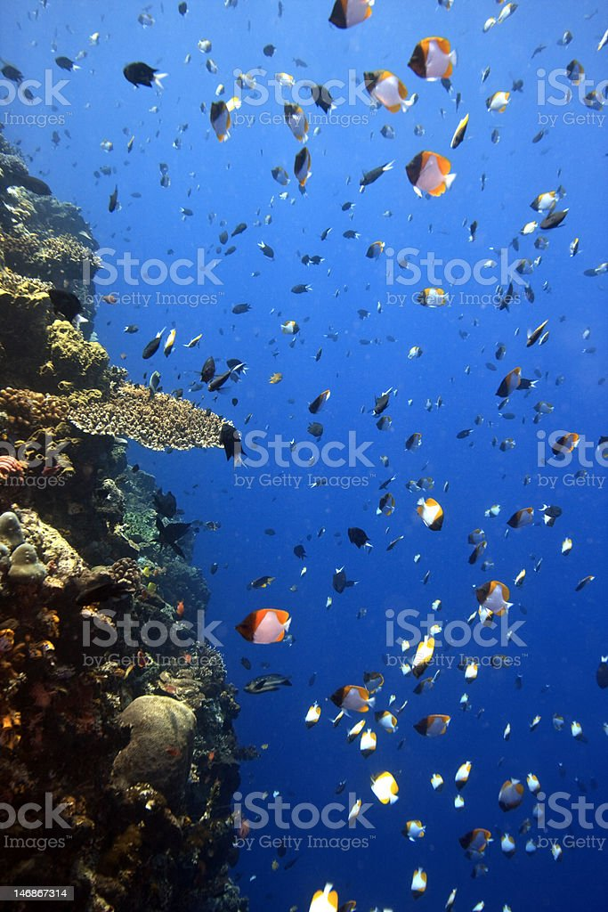 Coral reefs off the island royalty-free stock photo