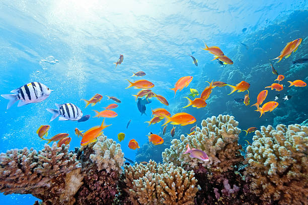 Coral scene on the reef stock photo